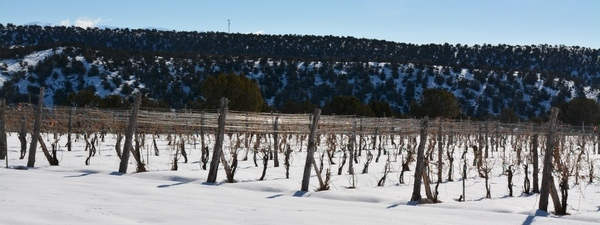 Vineyard at Rest, Leroux Creek Vineyards, Hotchkiss, CO